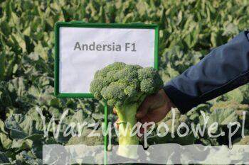 Andersia F1