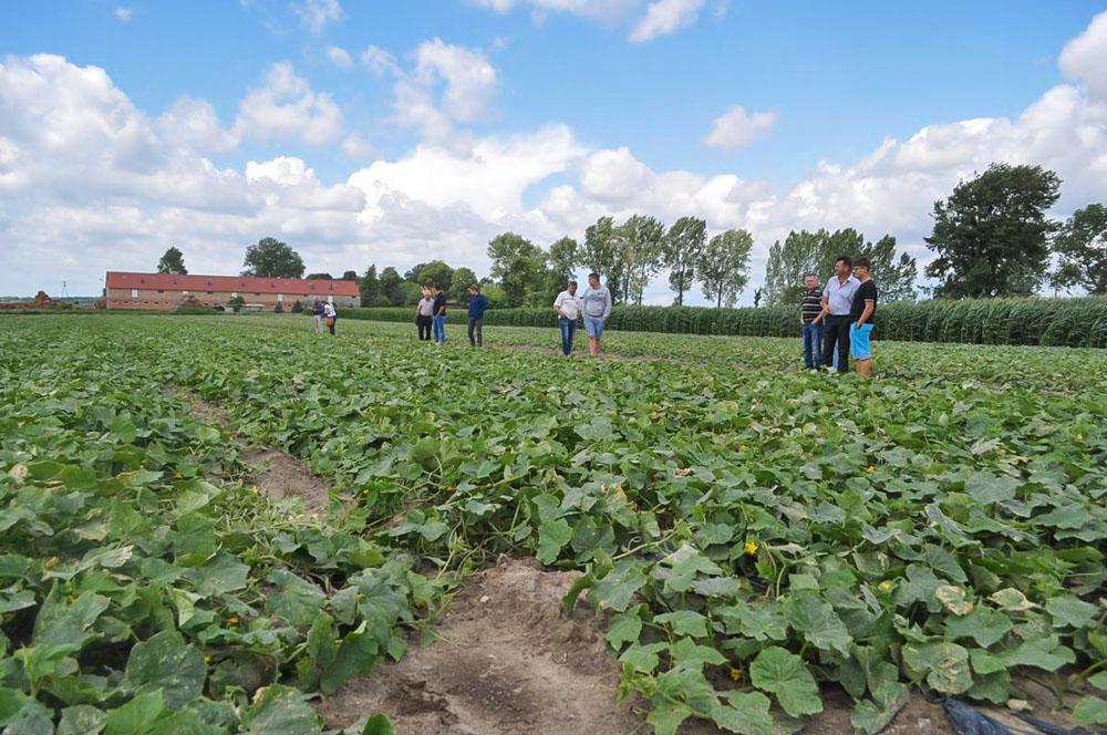 Każdy uczestnik mógł z bliska obejrzeć rośliny w kwaterze w której prowadzono doświadczenie nawozowe