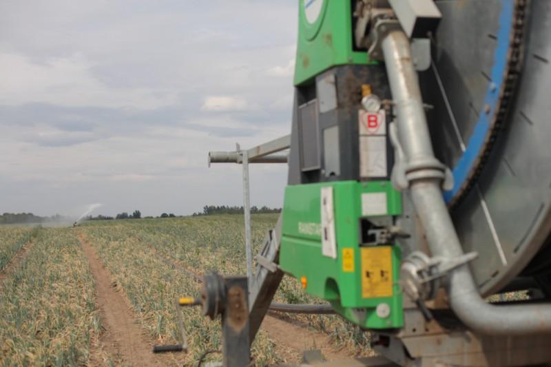 Kluczowe znaczenie w uprawie warzyw w tym roku miało nawadnianie - Uprawa warzyw