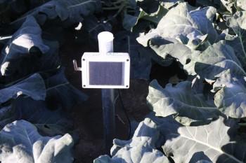 W gospodarstwie wykorzystuje się nowoczesne technologie w celu zapewnienia warzywom optymalnych warunków wrostu