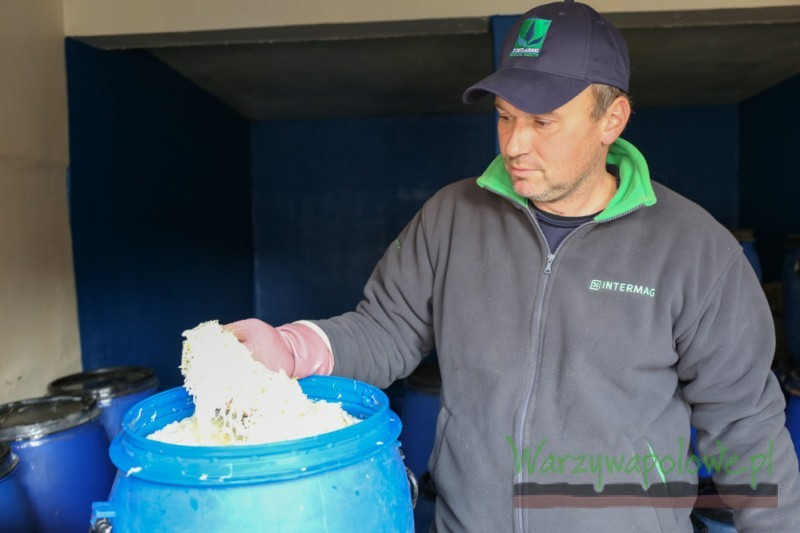 Damian Micyk, część kapusty produkuje z przeznaczeniem na kwaszenie