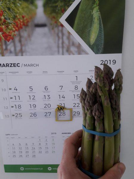Peczek zielonych szparagów